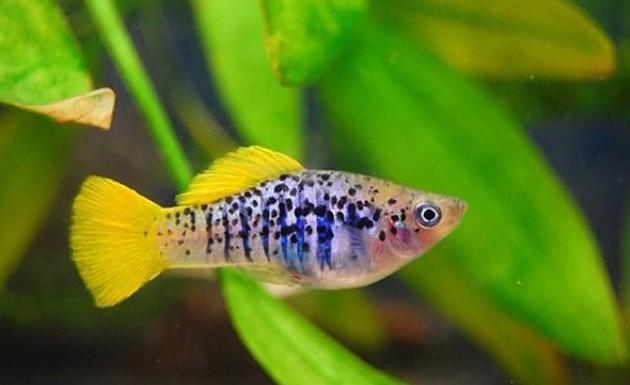 аквариумные пресноводные рыбки фото и названия