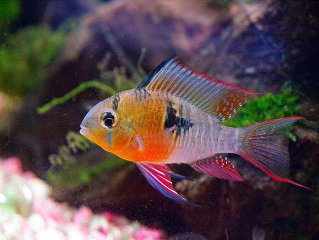 Удивительно красивая рыбка.