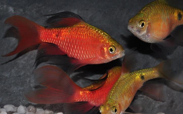 Содержание аквариума уход за рыбами 39