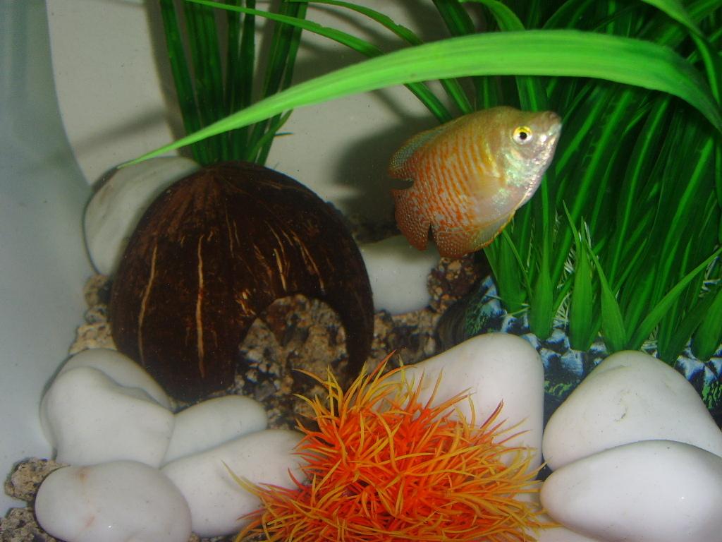 Поделки в аквариума своими руками фото фото 710