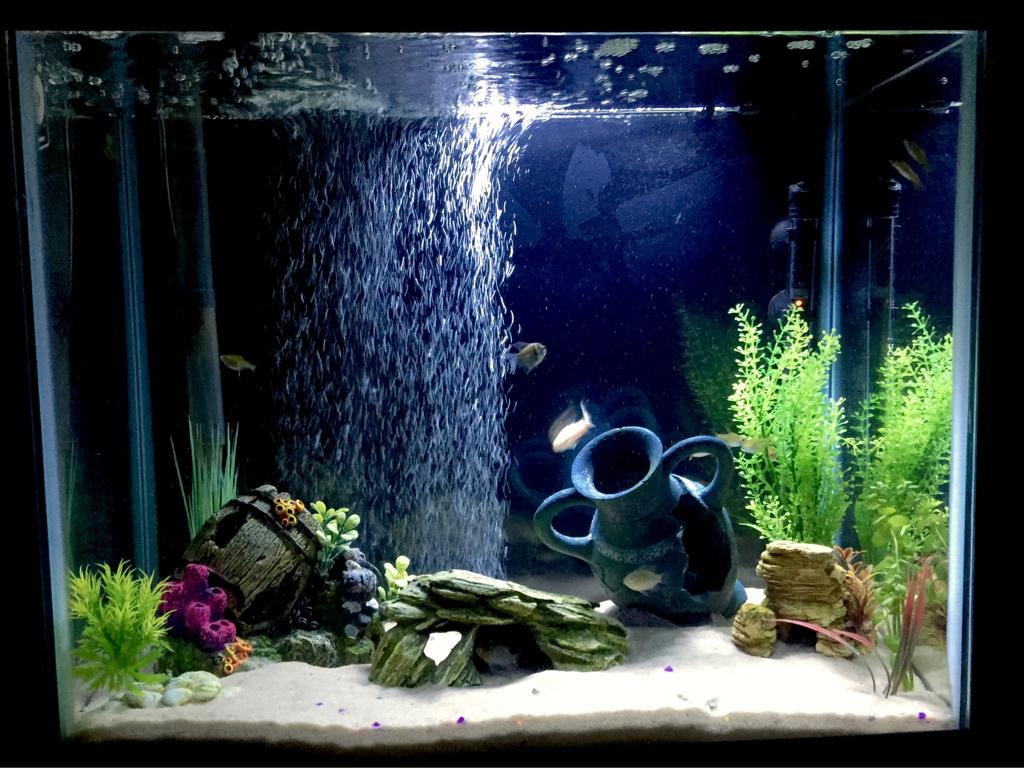 Поделки в аквариума своими руками фото фото 524