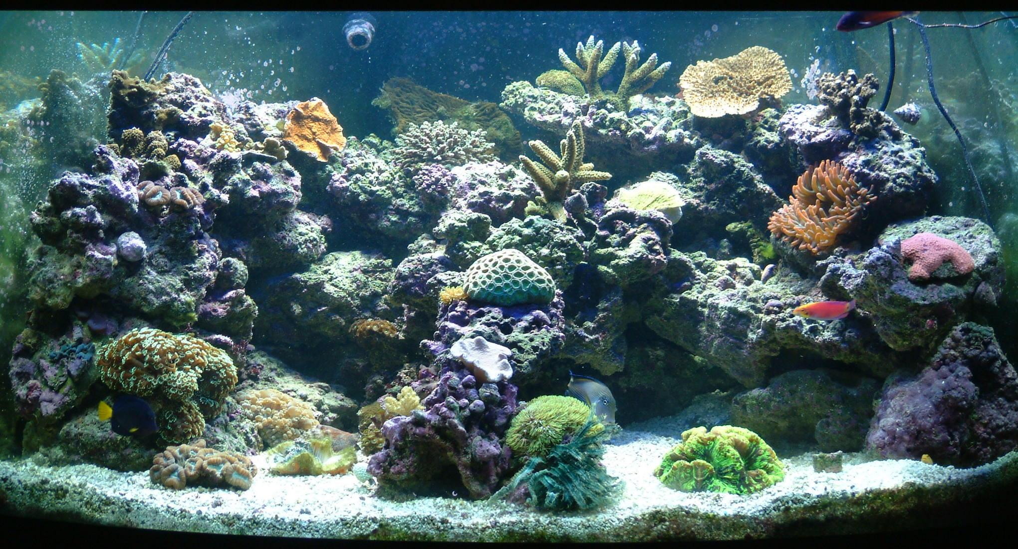 Как сделать воду в аквариуме мягче фото 698