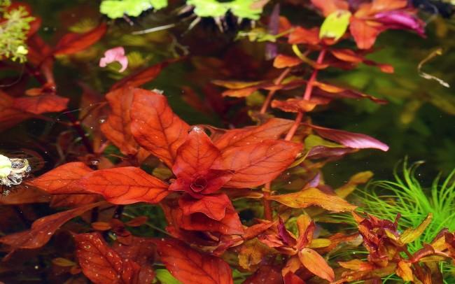 Необычное водное растение.