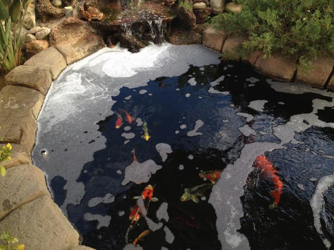 Пена в большом аквариуме.