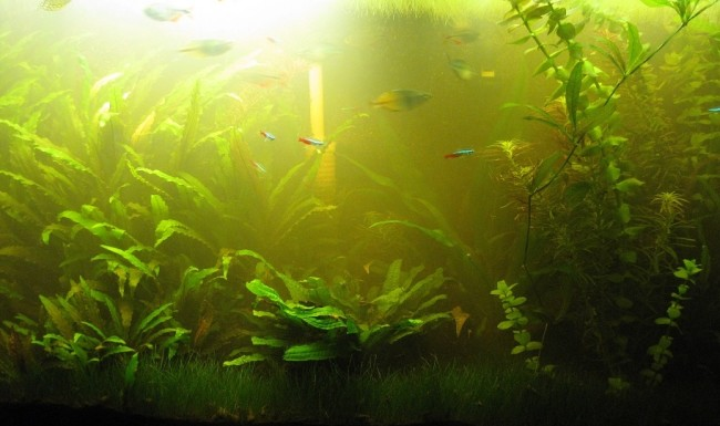 Вода в аквариуме пахнет болотом.