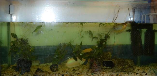 Почему вода в аквариуме быстро загрязняется