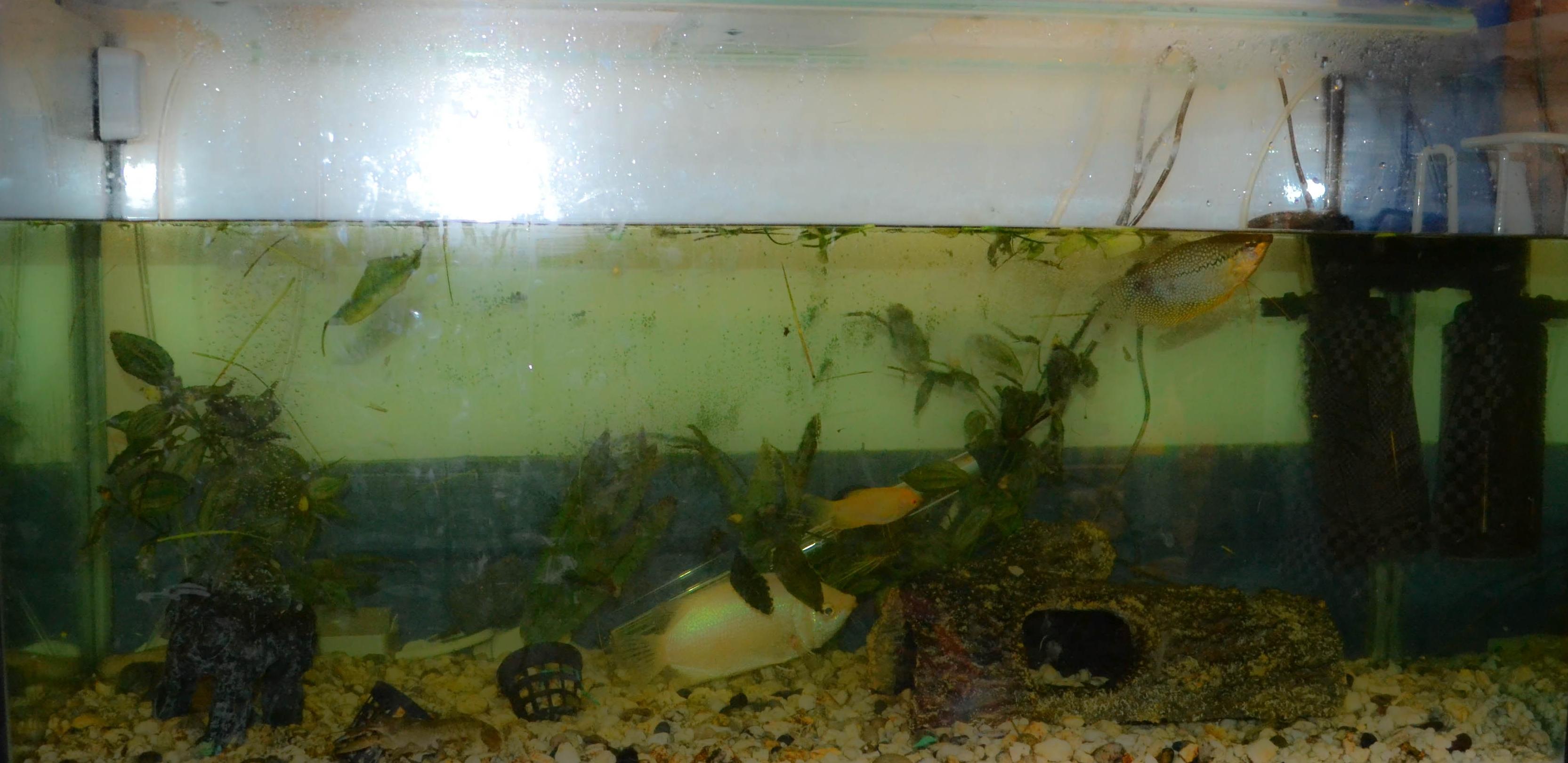 Как сделать воду в аквариуме кристально чистой фото 688