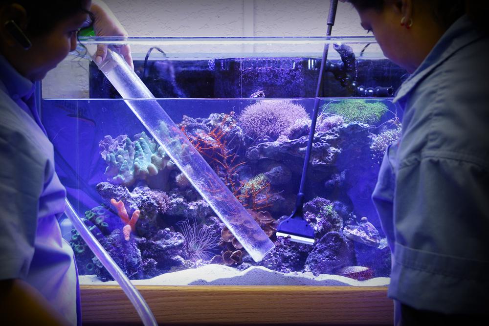 Смягчить воду в домашних условиях для аквариума
