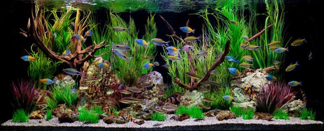 Аквариум с тропическими рыбками.