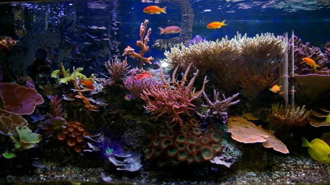 Тропический аквариум.