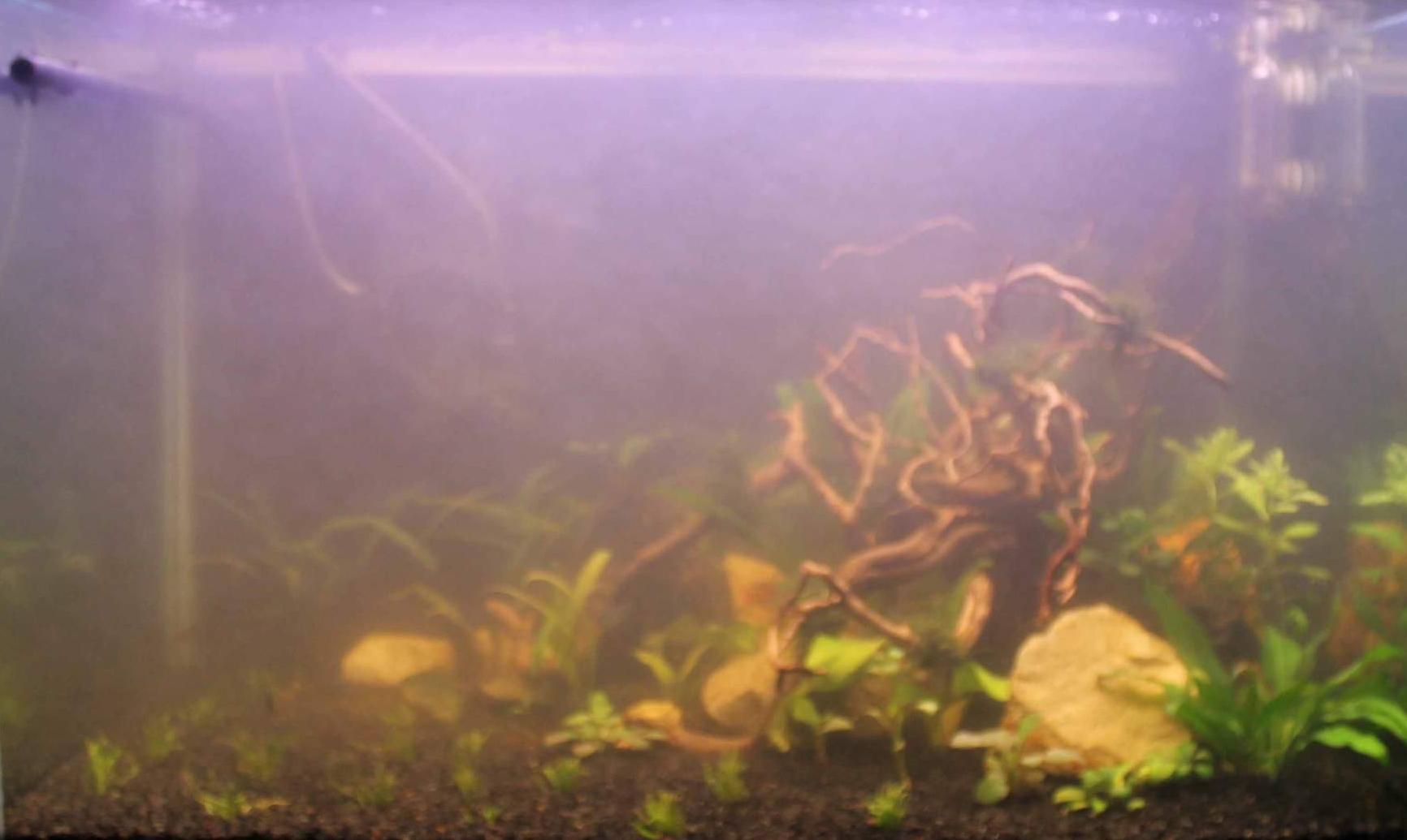 Почему белеет вода в аквариуме с рыбками