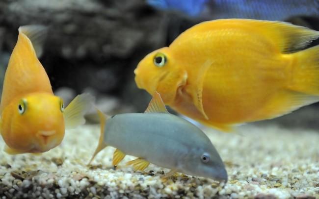 Обитатели аквариума.