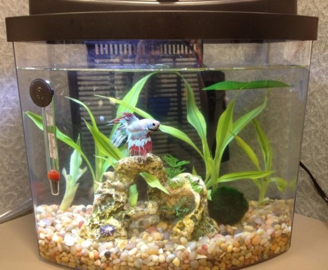 Аква для рыбок петушки.