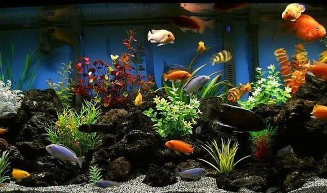 Дизайны аквариумов с цихлидами