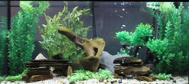 Аквариум для цихлид с растительностью.