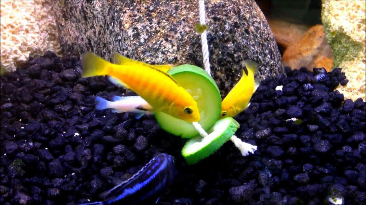 Как кормить рыбок в домашних условиях 230