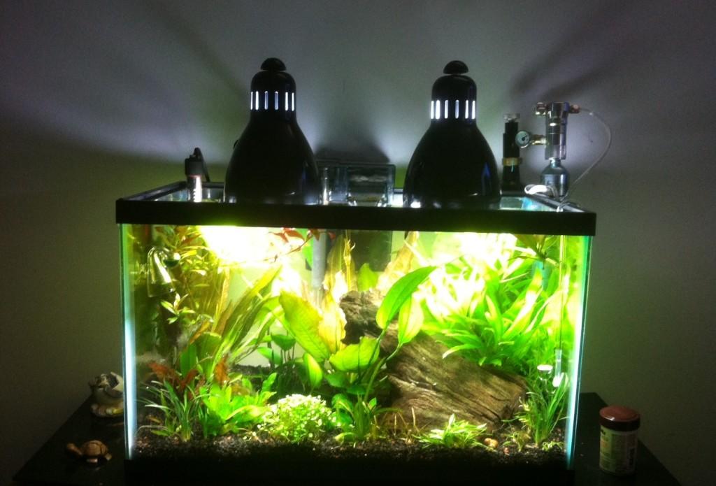 Как сделать чтобы аквариум не зеленел