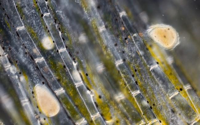 чем лечить ихтиофтириоз Болезни аквариумных рыб и их лечение. Ихтиофтириоз.