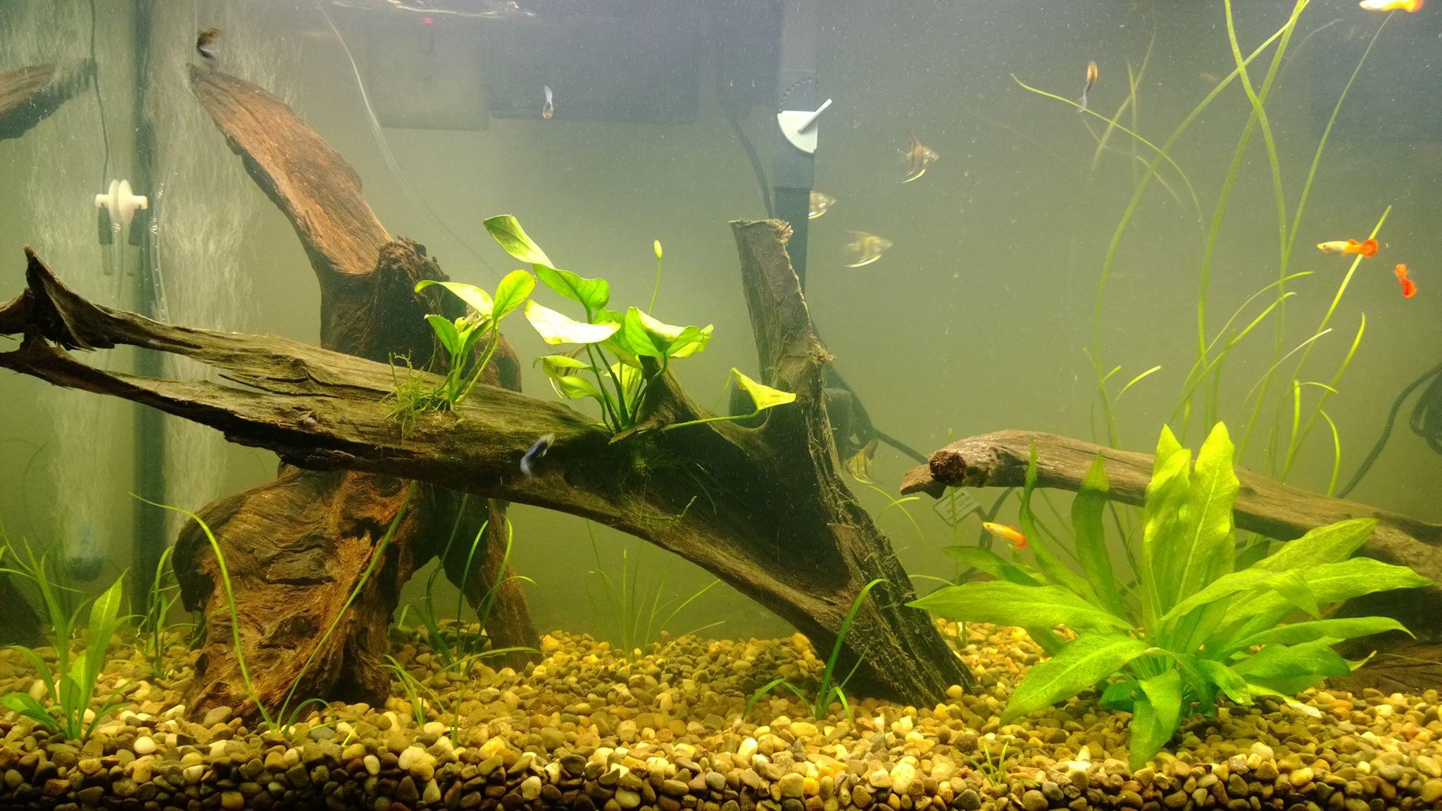 как сделать коряги в аквариум