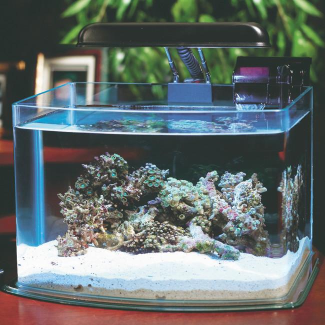 Маленький аквариум.