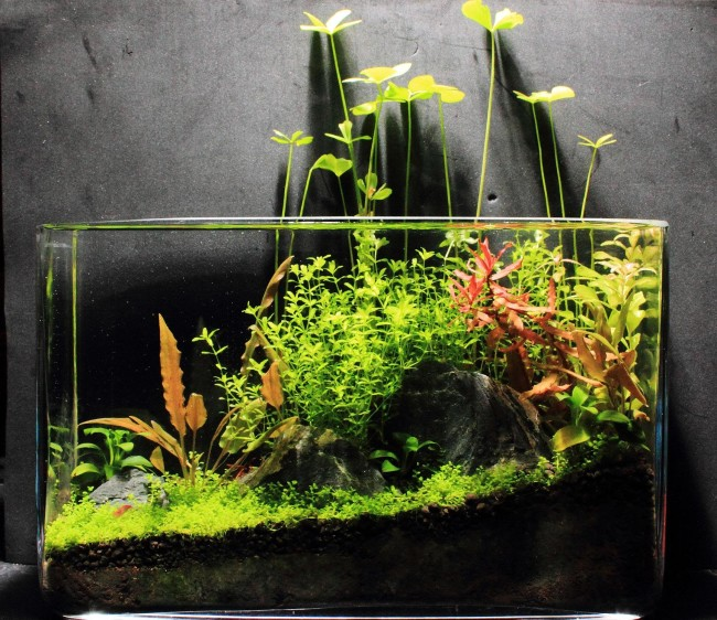 Маленький нано аквариум