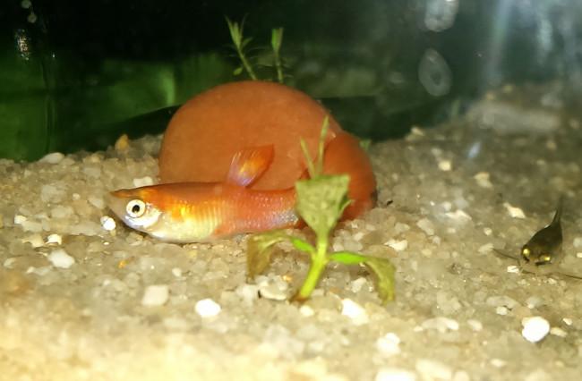 Странное поведение рыбы.