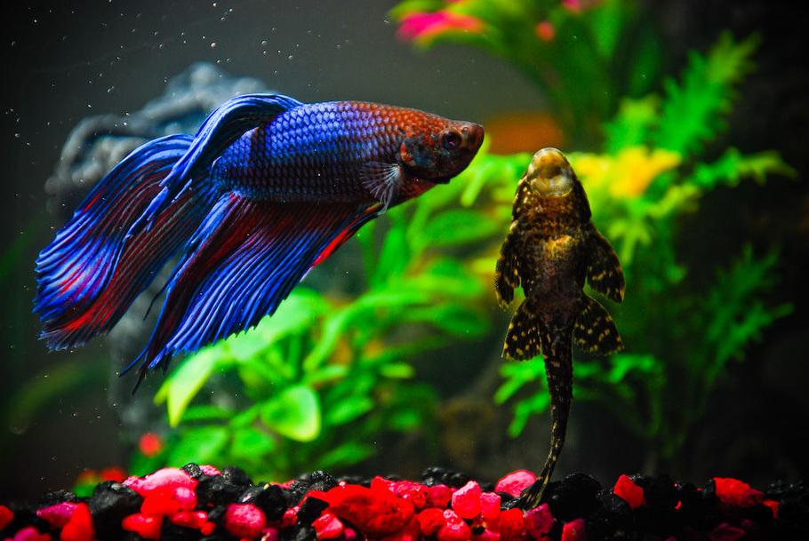 Какие отношения у рыб с рыбами 57
