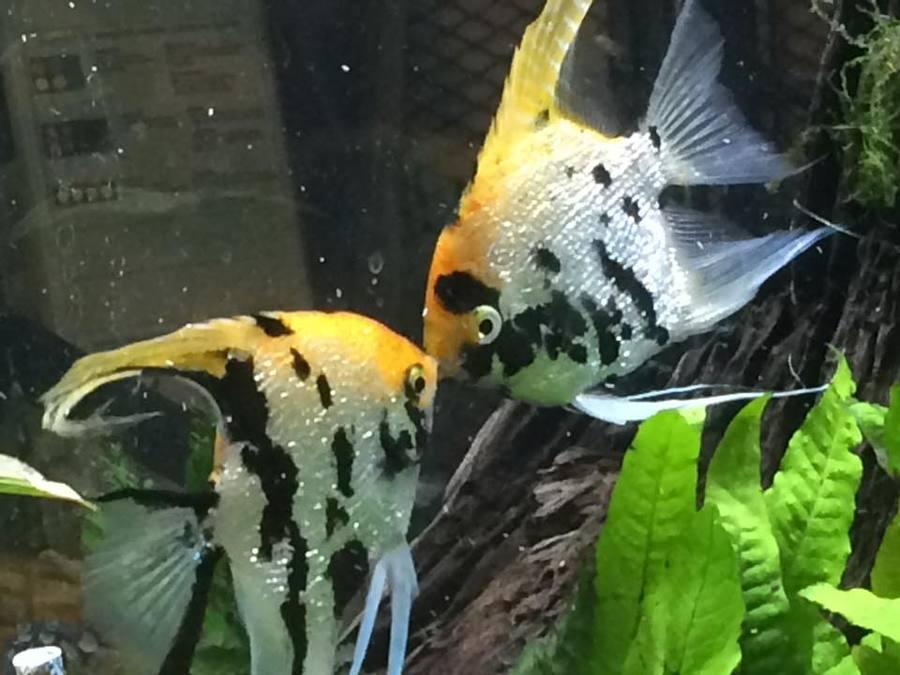Все дело в том что еще вчера днем , этот аквариум выглядел вот так