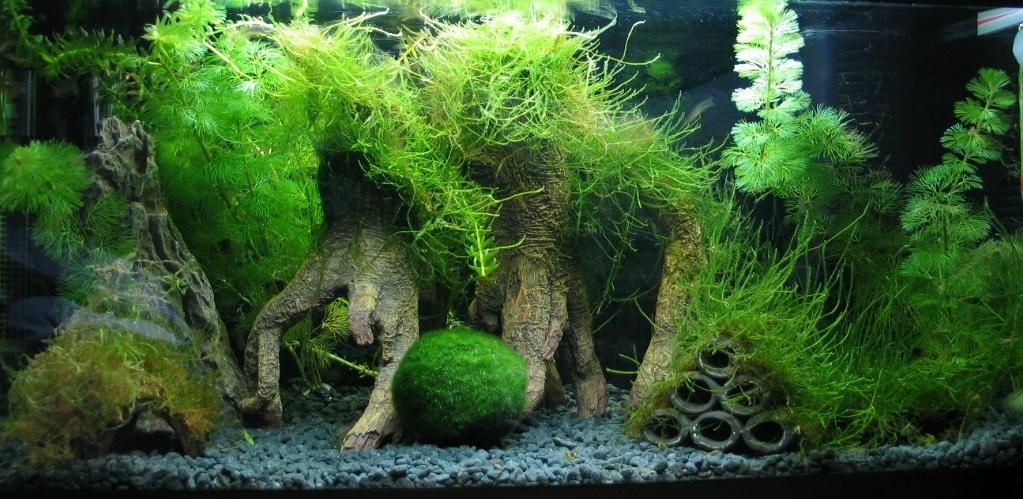 Выращивание мхов аквариумных 66
