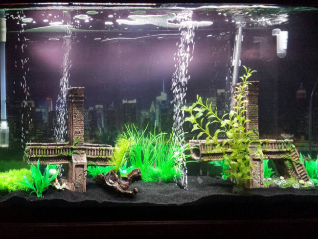 Аэрация в аквариуме – основа биофильтрации.