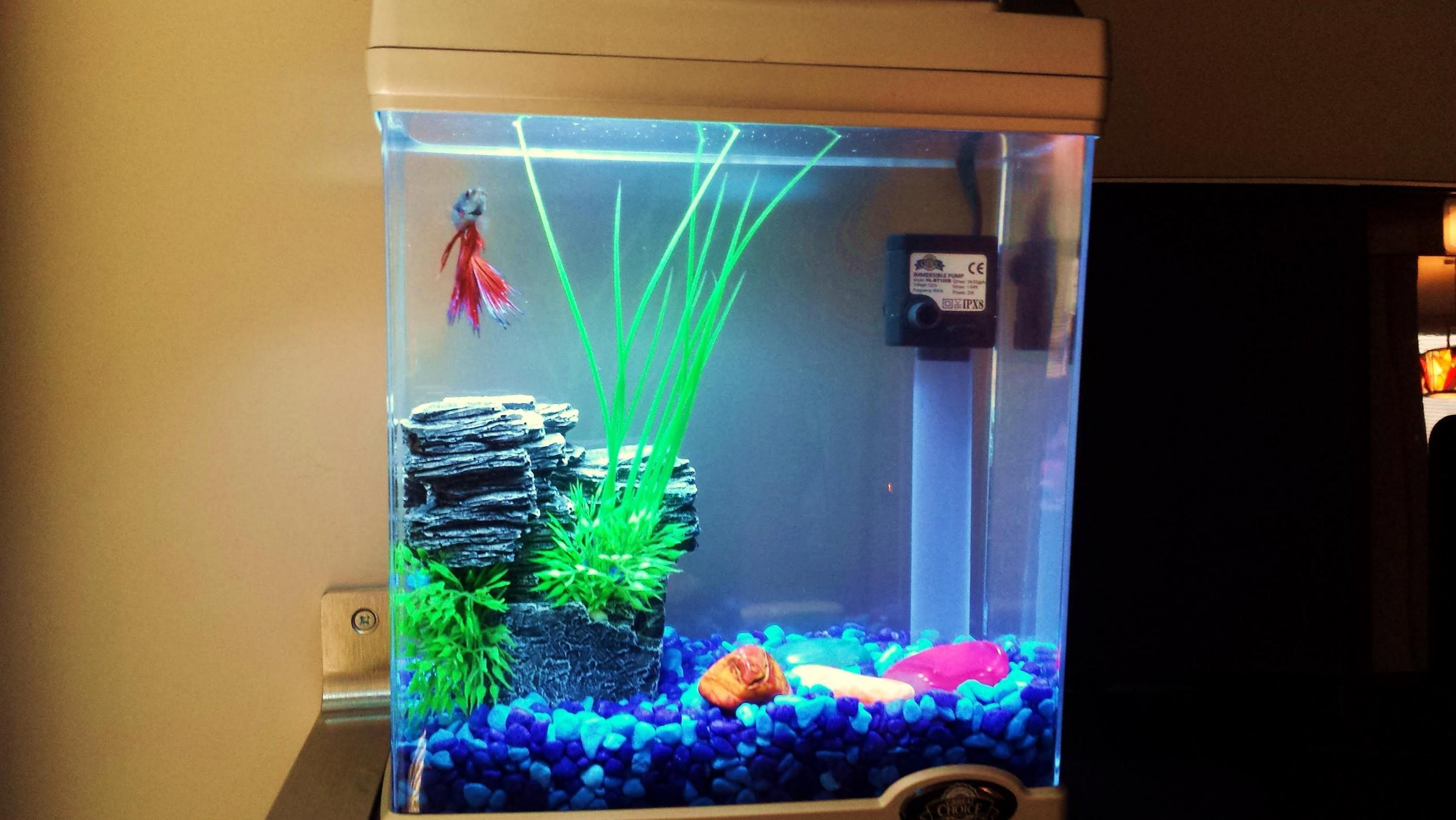 Рыбки для аквариум в домашних условиях 103