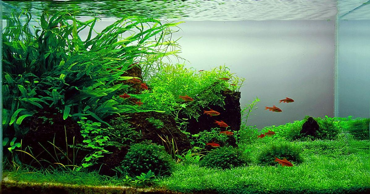Дизайн аквариума своими руками фото 290