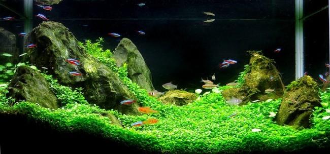 Населенный аквариум.