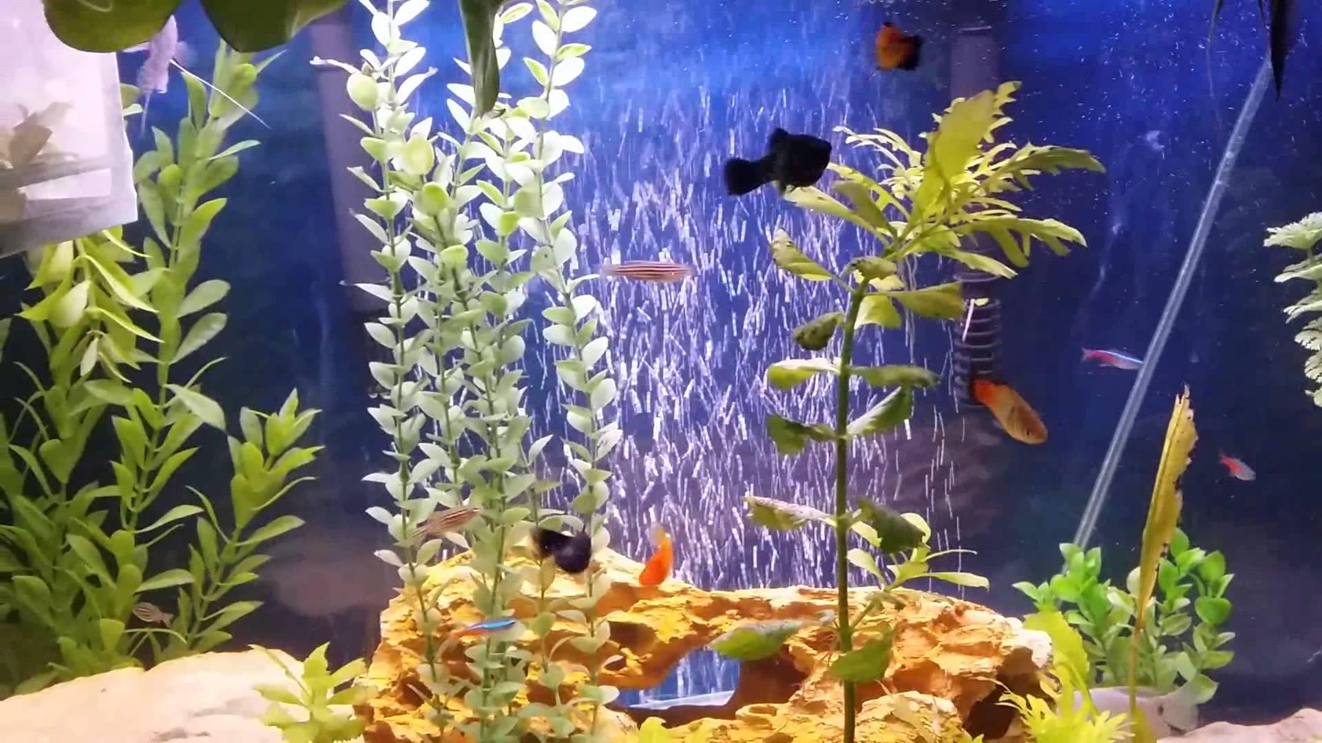 Аквариумные рыбки Данио, виды, фото, содержание ...