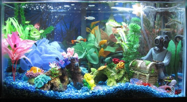 Общий аквариум с гуппи.