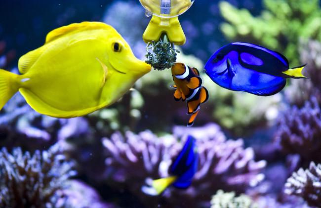 Кормление морских рыбок.