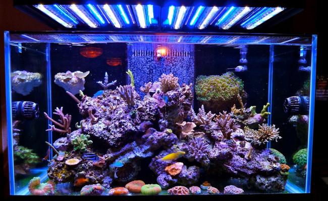 Свет в морском аквариуме.