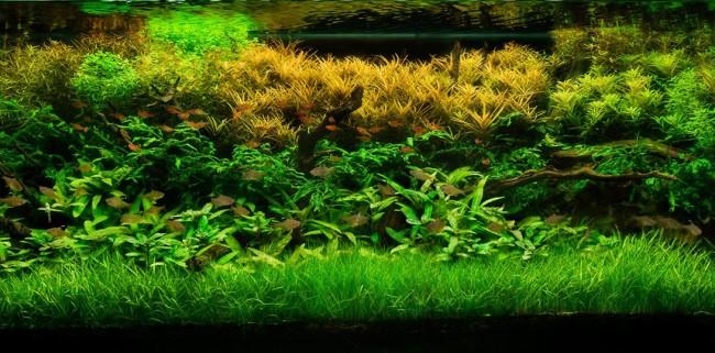 Аквариумные растения.