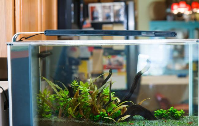 Освещение небольшого аквариума.
