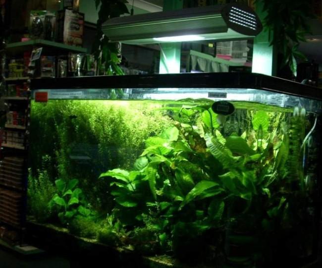 Аквариумные растения и освещение.