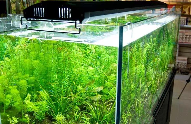 Аквариум освещение для растений своими руками 31