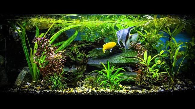 Аквариум с растениями и рыбками.