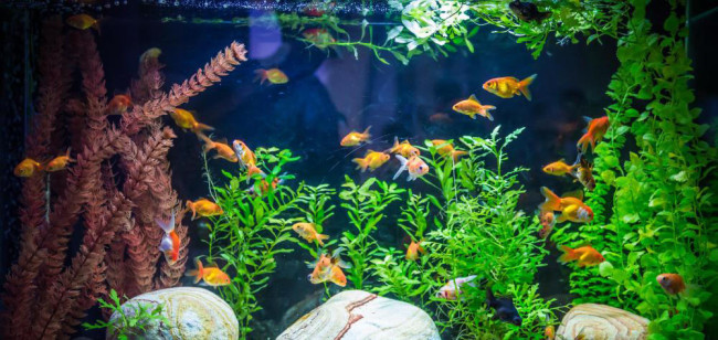 Аквариум с различными рыбками.