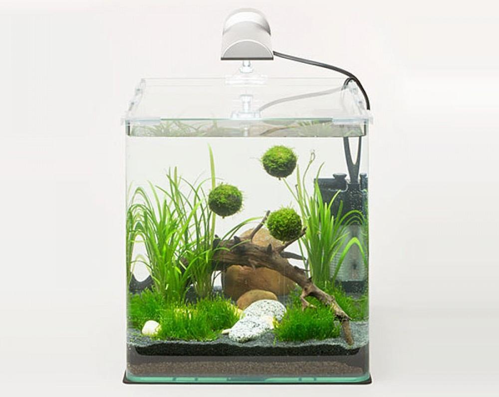 пути какой нано аквариум выбрать на его использование