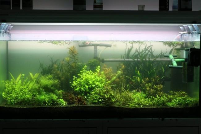 Внешний фильтр в аквариуме.
