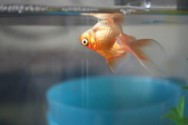 Мертвая рыбка.