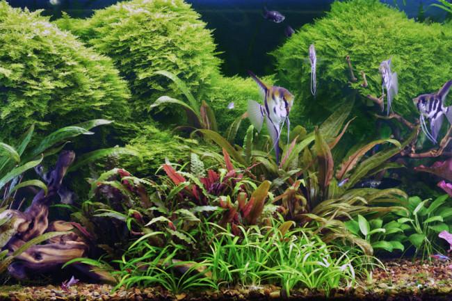 Удобрения для аквариумных растений.