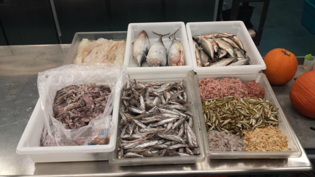Фарш для аквариумных рыбок