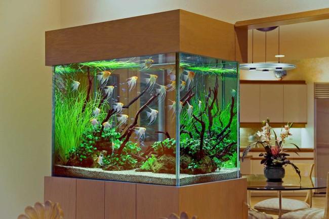 Место для аквариума.