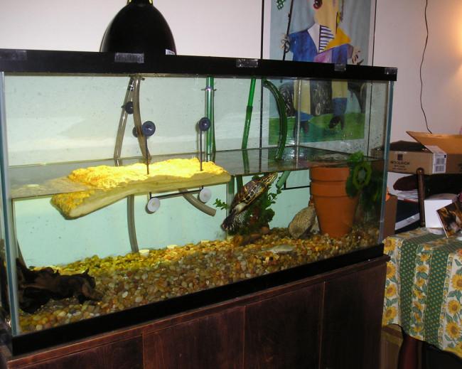Аквариум для черепахи с участком суши.